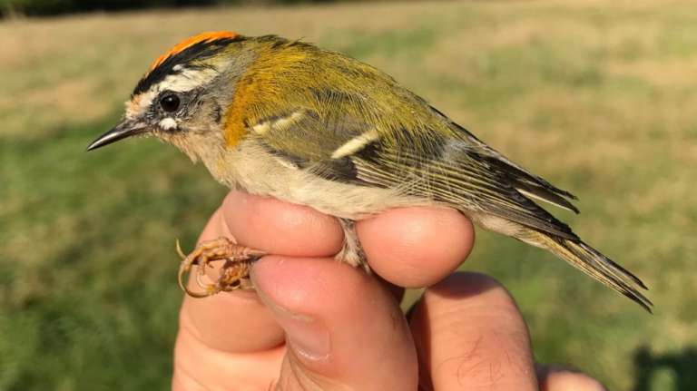 Poole Harbour Birds and Birding Introduction Course Tues 2nd Nov 2021